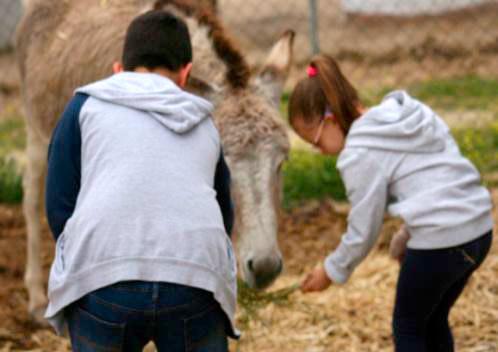 Inglés y animales en entorno natural en la Granja del Ayer